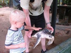 Stor havskildpadde