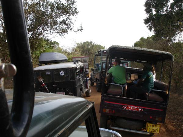 Mange jeep og turister