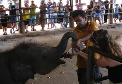 Sutteflaske til babyelefanter