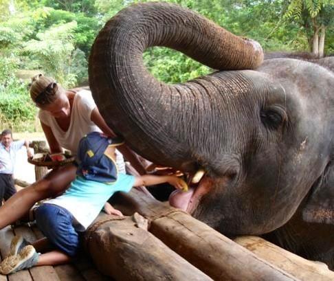 Håndfodring af elefanter