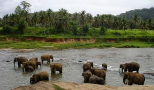 Elefanter i vandet