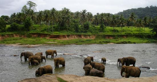 Elefanter på Sri Lanka – her kan du se elefanterne